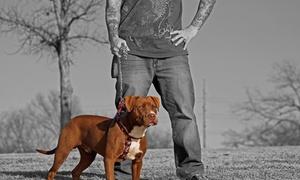 Emma Bear Photography: 30-Minute Pet Photo Shoot from Emma Bear Photography (70% Off)