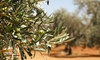 Adottare un albero di ulivo