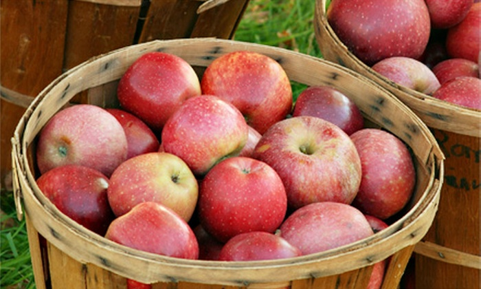 Montgomery Orchard - Montgomery, Minnesota: Apple Picking and Cider Making Two or Four with Corn Maze Option at Montgomery Orchard (Up to 52% Off)