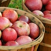 Up to 52% Off Apple Picking, Cider Making, and Corn Maze