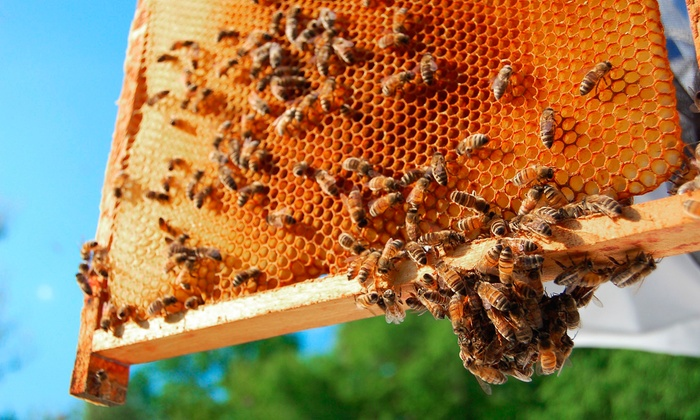 Beekeeping Tour and Honey Tasting - Garland: Look Into a Honeybee Hive with an Experienced Beekeeper