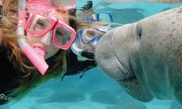 Reel River Tours and Charters - Reel River Tours and Charters: Swim with Manatees Tour for One or Two at Reel River Tours and Charters (Up to 58% Off)