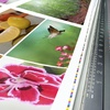 75% Off Photo Printing Services