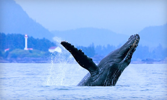 Jamie's Whaling Station & Adventure Centres - Multiple Locations: Whale-Watching, Bear-Watching, or Hot-Spring Tour from Jamie's Whaling Station & Adventure Centres (Up to 55% Off). Three Options Available.