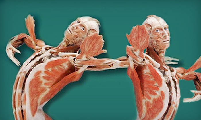 """Body Worlds Vital"" - The Congaree Vista: $18 for Outing for Two to ""Body Worlds Vital"" at the South Carolina State Museum in Columbia (Up to $36 Value)"