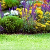 67% Off Lawn Cleanup from Expert Care – Services