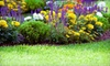 Expert Care - Services - Rochester: $99 for a Springtime Lawn Cleanup from Expert Care – Services ($300 Value)