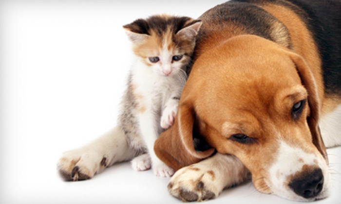 Westlake Animal Hospital - West Lake Hills: $24 for a Pet Exam at Westlake Animal Hospital in West Lake Hills ($48.99 Value)