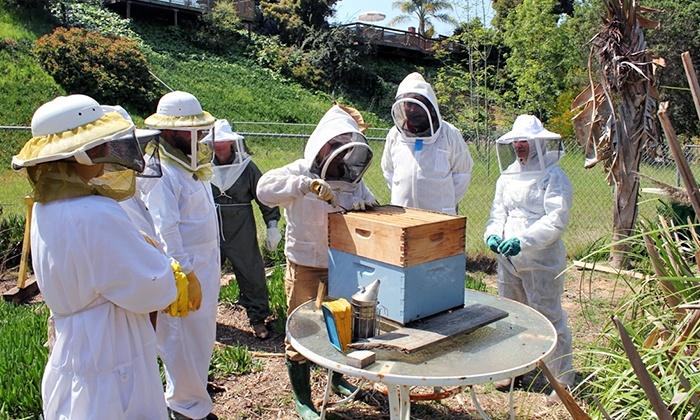 Hands-On Beekeeping Class - National City: Walk Through a Honeybee Hive with a Local Beekeeping Expert
