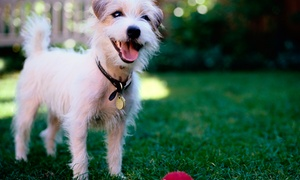 Pack Leader Dog Academy: Four One-Hour Training Sessions for an Adult Dog or Puppy with Pack Leader Dog Academy (Up to 50% Off)