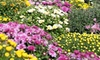 Prosek's Greenhouse - Winfield: Plants, Flowers, and Decorations at Prosek's Greenhouse (45% Off)