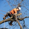 30%Off Tree Removal Services