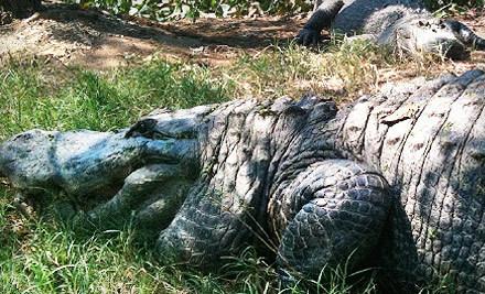 Klieberts Turtle and Alligator Farm - Klieberts Turtle and Alligator Farm in Hammond