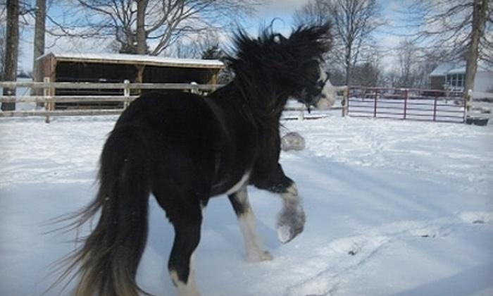 Gallop Again - Harrison: $12 for One Children's Horseback-Riding Lesson at Gallop Again in Harrison ($25 Value)