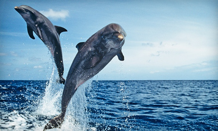 Adventure Cruises - Hilton Head Island: Dolphin Watch Nature Cruise for One or Four from Adventure Cruises on Hilton Head Island (Up to 55% Off)