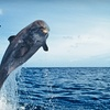 Up to 55% Off Nature Cruise on Hilton Head Island