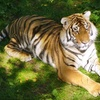 Up to 51% Off at Bowmanville Zoo