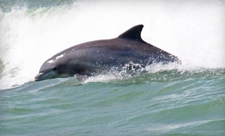 1 Child's Ticket for a Sunset Dolphin Cruise (a $19 value) - Adventures in Paradise in Fort Myers