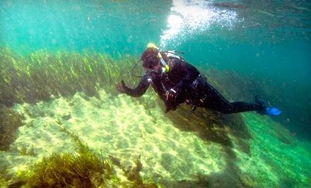 Down Under Dive Shop - Down Under Dive Shop in Gulf Shores