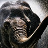 Denver Zoo – Up to 62% Off Admission