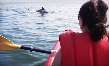 2.5-Hour Dolphin and Nature Encounter for One in a Single Kayak (a $75 value) - Ocean Eagle Kayak Adventures in Virginia Beach