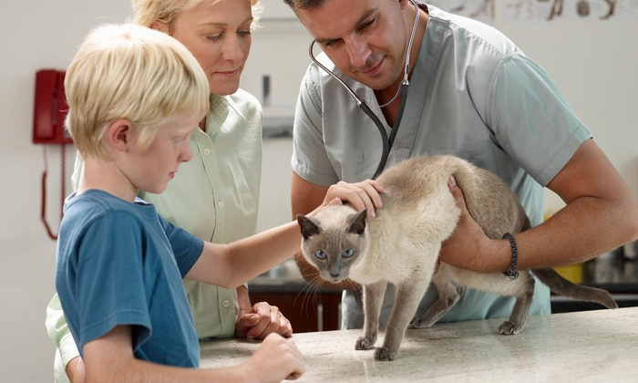 Balanced Veterinary Care - Bradenton: $72 for $130 Worth of Pet Care — Balanced Veterinary Care