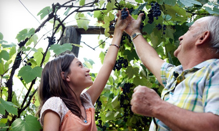 Mitillini Vineyards - Dowling Park: $20 for 10 Pounds of You-Pick Grapes at Mitillini Vineyards in Live Oak ($40 Value)