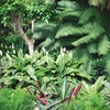 Up to 58% Off Palms or Plants in Southwest Ranches