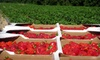Fifer Orchards - Dover: $10 for $20 Worth of Fresh Produce & Local Artisanal Food Products at Fifer Orchards in Wyoming