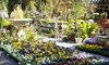 Southern Vistas Landscape & Garden Center - Columbia/Rosewood/Owen's Field Airport: $12 for $24 Worth of Flowers, Shrubbery, and Garden Accessories at Southern Vistas Landscape & Garden Center