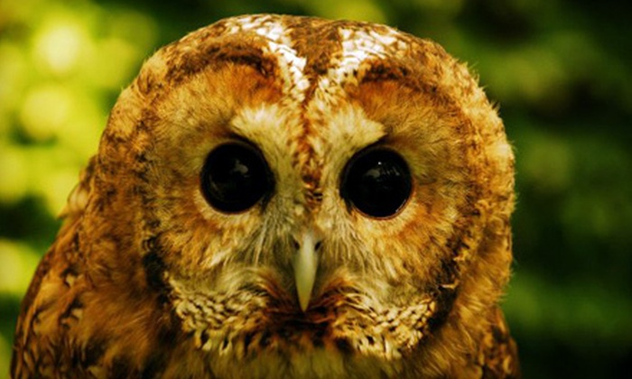 Wildlife Learning Center - Sylmar: Zoo Outing for Two or Four to Wildlife Learning Center in Sylmar (Up to Half Off)