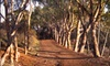 Malibu Discovery - Los Angeles: $39 for a Guided Sunrise Hike for Two from Malibu Discovery ($78 Value)