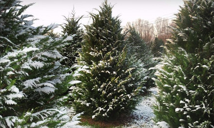 Trim-A-Tree Farms - Athens: $10 for $20 Toward Any Christmas Tree at Trim-A-Tree Farms in Athens