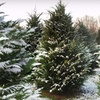 $10 for $20 Toward Any Christmas Tree in Athens