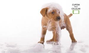 Planet Animal: Planet Animal- Taguatinga: banho, escovação dentária, limpeza de ouvidos, corte de unhas e mais(opção de tosa higiênica)