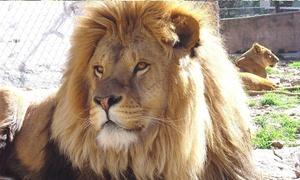 Zoo-Fauverie du Mont Faron: Entrées au choix pour enfants et adultes dès 9,99 € au  Zoo-Fauverie du Mont Faron