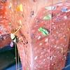 Up to 83% Off Rock Climbing at ClimbX