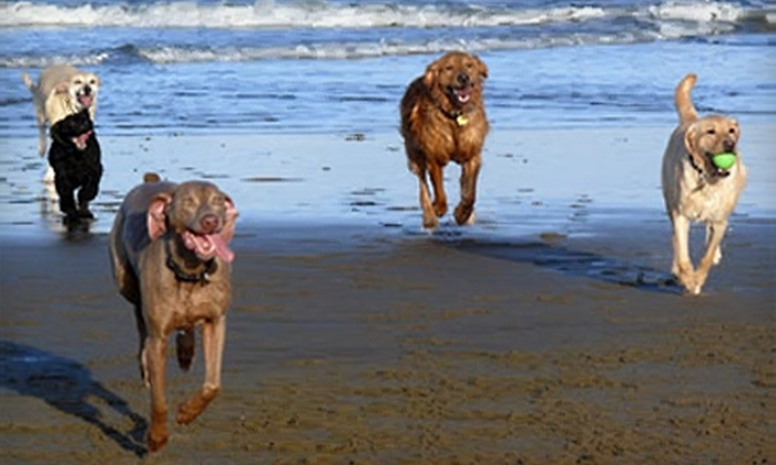 SuperDog - Financial District: $95 for $180 Worth of Group Dog-Walking Services from SuperDog