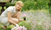 Apex Landscaping - Northbrook: $75 for Three Flats of Annuals, Including Installation, from Apex Landscaping ($150 Value)