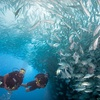 54% Off Scuba-Diving Certification in Escondido