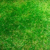 Up to 64% Off from Hinshaw Turf & Tree