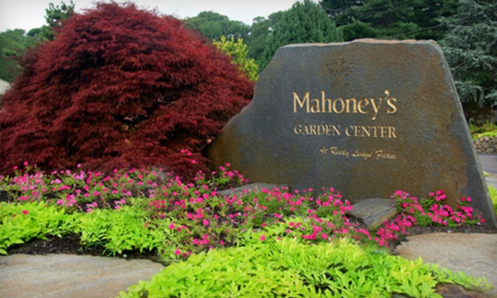 Mahoney's Garden Center - Multiple Locations: $20 for $40 Worth of Plants, Flowers, and Garden Supplies at Mahoney's Garden Center