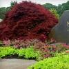 Half Off Plants & Garden Supplies at Eight Mahoney's Garden Center Locations