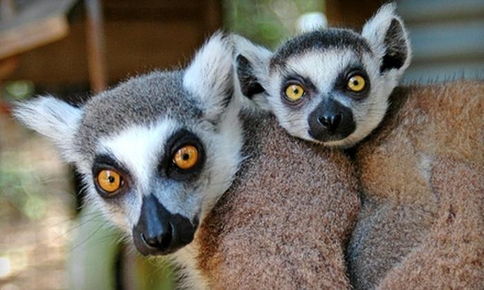 Capital of Texas Zoo - Cedar Creek: Zoo Outing for Two or Four at Capital of Texas Zoo. Five Options Available.