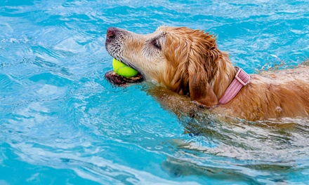 $50 for a 1Hour Doggy Aquatic Therapy Session at Heavenly Spa ($100 Value)