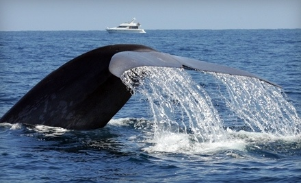 1 Ticket to a Sunset Whale Watching Cruise (Up to $32 value) - Dana Wharf Sportfishing & Whale Watching in Dana Point