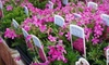 Reems Creek Nursery - Reems Creek: $15 for $30 Worth of Plants and Gardening Supplies at Reems Creek Nursery