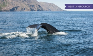 Whale Research EcoExcursions: $75 for a Whale-Watching Tour and Museum Visits for Two from Whale Research EcoExcursions ($150 Value)