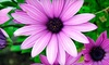 Garden World - Multiple Locations: $15 for $30 Worth of Plants and Garden Supplies at Garden World