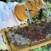 69% Off Beekeeping Class in Copper Canyon